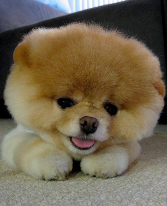 Here's a puppy to distract you from all this negativity